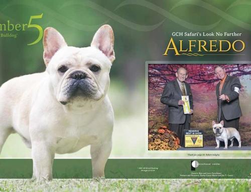 "No. 5 French Bulldog ""Alfredo"""