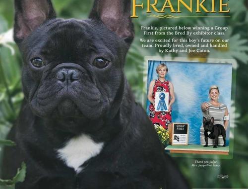 """Safari I Did It My Way """"Frankie"""""""